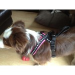 Black skulls flyball harness